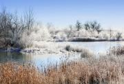 Hoar Prints - Morning Hoar Frost Print by Marilyn Hunt