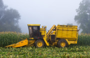 Sweet Corn Farm Prints - Morning in Muranyis Print by Tim  Fitzwater