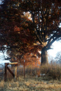 Autumn Scenes Prints - Morning in Tennessee Print by Amanda Barcon