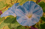 Morning Glories Paintings - Morning by Jean Marie Boyko
