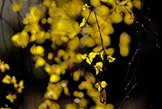 Backlit Prints - Morning Leaves Print by Ron Day