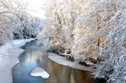 White River Scene Prints - Morning Light Fresh Snowfall Gauley River Print by Thomas R Fletcher