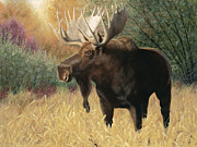 Moose Paintings - Morning Majesty by Tammy  Taylor