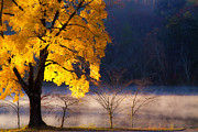 Autumn Photographs Photo Prints - Morning Maple ll Print by Rob Travis