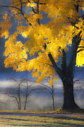 Autumn Photographs Photo Metal Prints - Morning Maple Metal Print by Rob Travis