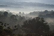 Morning Mist In Panama's Highlands Print by Heiko Koehrer-Wagner