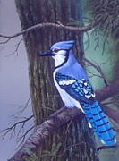 Bluejay Painting Metal Prints - Morning Mist Metal Print by Michael Allen