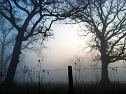 Burr Oak Tree Digital Art - Morning Mist by Michelle Hawk