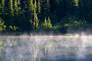 Fir Trees Photo Originals - Morning Mist by Mike  Dawson