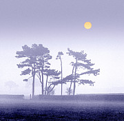 Pine-mist Framed Prints - Morning Mist Framed Print by Peter OReilly