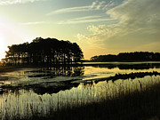 Morning On Assateague Island Print by Steven Ainsworth