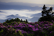 Purple Mountains Prints Posters - Morning on Grassy Ridge Bald Poster by Rob Travis