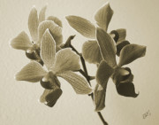 Monotone Prints - Morning Orchid Print by Ben and Raisa Gertsberg