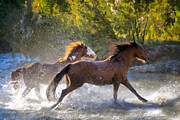 Running Horses Paintings - Morning Run by Janet Fikar