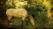 Grazing Horse Photo Posters - Morning Snack Poster by Rebecca Cozart