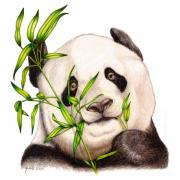 China Drawings - Morning Snack by Sheryl Unwin