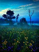 Geographic Prints - Morning Song Print by Phil Koch