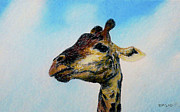 Giraffe Pastels Posters - Morning Stretch Poster by Richard Smith