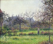 Orchard Painting Posters - Morning Sun Poster by Camille Pissarro