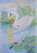 Swans... Drawings - Morning swim I  Original Colored pencil drawing by Debbie Portwood