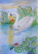 Swans... Drawings - Morning Swim II  Edited Original Art by Debbie Portwood