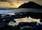 Al Brown Photos - Morning Tide Pool...