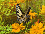 Butterfly Digital Art Posters - Morning Tiger Swallowtail Poster by J Larry Walker