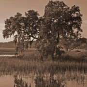Live Oak Digital Art - Morning Tree  by Phill  Doherty