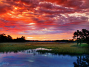 Lowcountry Digital Art Prints - Morning View Print by Phill  Doherty