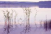 Violet Photos - Morning Zen. Pearly Moments of Sunrise. Ladoga Lake. Northern Russia by Jenny Rainbow