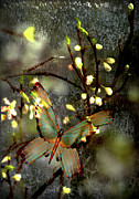 Grey Digital Art Originals - Mornings moth on apple blossom by Li   van Saathoff