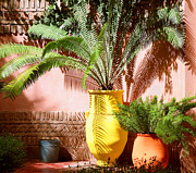 Moroccan Photos - Moroccan garden by Susan Wall