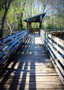 Florida Bridges Art - Morris Bridge Boardwalk by Carol Groenen