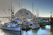 Morro Bay Photos - Morro Bay Boats by Kelly Wade