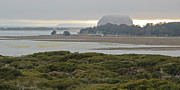 Morro Bay Framed Prints - Morro Rock From The Elfin Forest Framed Print by Heidi Smith
