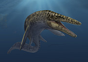 Mosasaurus Hoffmanni Swimming Print by Sergey Krasovskiy
