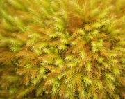 Forest Floor Photos - Moss Abstract by Ron Dahlquist - Printscapes