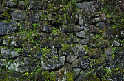 Field Stone Framed Prints - Moss and Stone Framed Print by John Greim