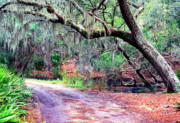 Saw Palmetto Photos - Moss Covered Live Oak by Thomas R Fletcher