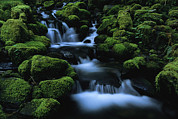Cascading Water Prints - Moss-covered Rock Surrounding Print by Melissa Farlow