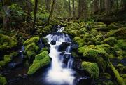 Riversides Prints - Moss-covered Rocks In Creek With Small Print by Natural Selection Craig Tuttle