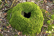 Forest Floor Photos - Moss Covered Tree Stump by Jeremy Walker