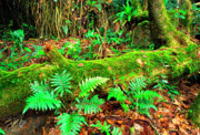 Tropical Rainforest Framed Prints - Moss on Fallen Tree and Ferns Framed Print by Thomas R Fletcher