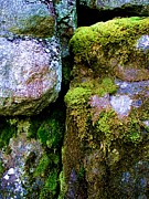 Bridget Johnson Acrylic Prints - Moss on Rocks Acrylic Print by Bridget Johnson