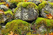 Moss On Stone Print by Conny Sjostrom
