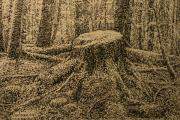 Terry Perham Originals - Moss On The Stump by Terry Perham