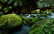 Gippsland Prints - Moss Rocks Print by Heather Thorning