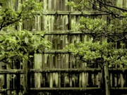 Bamboo Fence Photo Posters - Mossy Bamboo Fence - Digital Art Poster by Carol Groenen
