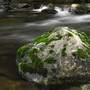 Moss Green Framed Prints - Mossy Boulder in Mountain Stream Framed Print by John Stephens
