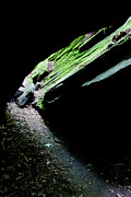 Abstract Landscape Art - Mossy Cave by Adam Pender